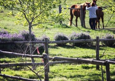 horsey talk